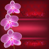 Greeting or invitation card with orchid flower, ve Stock Photography