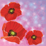Greeting or invitation cards with red poppies Royalty Free Stock Photos
