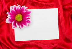 Greeting paper card and flower on red cloth Stock Photo