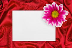 Greeting paper card and flower on red cloth Stock Photos