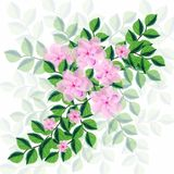 Greeting picture for MMS picture banner spring flowers for day eighth of March. Greeting picture for MMS picture banner spring flowers eighth of March tulips day Stock Image