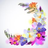 Greeting square background with freesia flowers. Vector greeting background with pictorial freesia flowers Stock Image