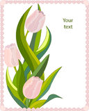 Greetings card pink tulips Stock Photo