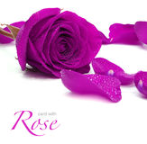 Greetings card with rose. Greetings card with purple rose Royalty Free Stock Images