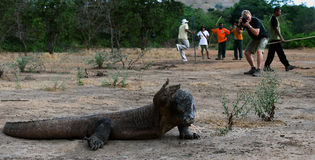 Greetings from a dragon with Komodo. Stock Photography