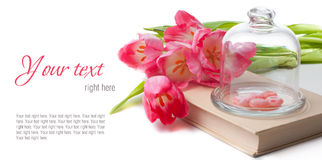 Greetings, invitations, with pink tulips Royalty Free Stock Photo