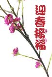 Greetings with Plum Blossom Royalty Free Stock Photos