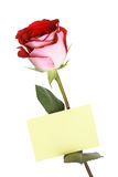 Greetings Rose Stock Photo