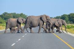 Gregge degli elefanti che attraversano la strada Immagine Stock Libera da Diritti