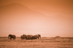 Gregge degli elefanti sulla savana africana Immagini Stock