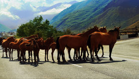 Gregge dei cavalli Fotografia Stock Libera da Diritti