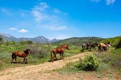 Gregge dei cavalli nelle montagne Fotografia Stock Libera da Diritti