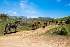 Gregge dei cavalli nelle montagne Fotografie Stock Libere da Diritti