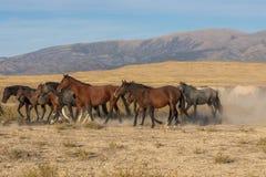 Gregge dei cavalli selvaggi immagine stock
