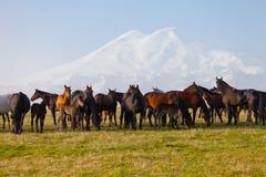 Gregge dei cavalli su un pascolo di estate Fotografia Stock