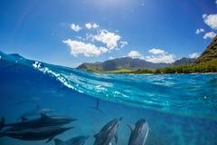 Gregge dei delfini subacquei con paesaggio sopra la linea di galleggiamento immagini stock