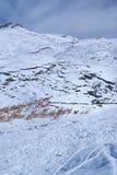 Gregge dei lama nelle Ande Fotografie Stock