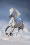 Gregge del cavallo fatto funzionare in neve immagini stock