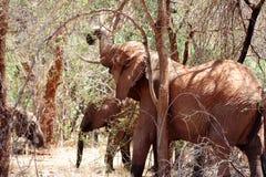 Gregge dell'elefante Fotografia Stock Libera da Diritti