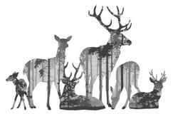 Gregge della siluetta dei cervi illustrazione vettoriale