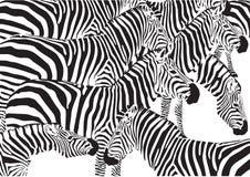 Gregge della zebra royalty illustrazione gratis