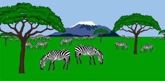 Gregge della zebra nel paesaggio africano illustrazione vettoriale