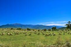 Gregge delle pecore nel paesaggio della montagna, Mariovo, Macedonia immagini stock libere da diritti