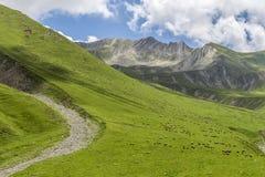 Gregge delle pecore sul fianco di una montagna Fotografia Stock Libera da Diritti