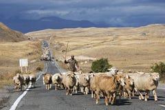 Gregge delle pecore sulla strada in Armenia Fotografie Stock