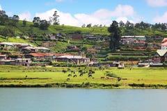 Gregory lake in Nuwara Eliya - Sri Lanka Stock Images