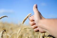 Greifen Sie herauf Hand mit Weizen am sonnigen Tag draußen ab Lizenzfreie Stockfotografie