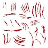 Greifer-Kratzer-Vektor Getrennt auf weißem Hintergrund Bär oder Tiger Paw Claw Scratch Bloody Zerrissenes Papier Lizenzfreie Stockfotografie