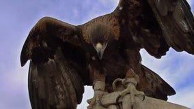 Greifvögel stock footage