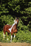 Greja den Pony hästen i sommarträn Arkivbild