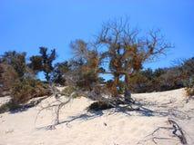Grekisk öKreta - Chrissi Island royaltyfri bild