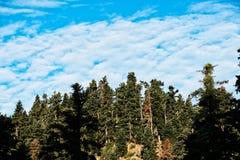 Grekisk bergpinjeskog och fluffiga vita moln Arkivbild