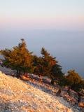 Grekisk gran Fotografering för Bildbyråer