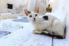 Grekisk katt Arkivfoto