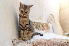 Grekisk katt Arkivfoton