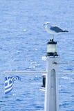 Grekisk Seagull Royaltyfria Foton