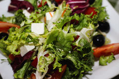 Grekiska gräsplaner för salladtomatost royaltyfri fotografi