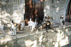 Grekiska katter från den Lefkada ön Fotografering för Bildbyråer