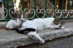 Grekland Lesbos, katter från Petra Royaltyfri Fotografi