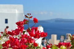 Grekland Santorini, Oia Arkivbild