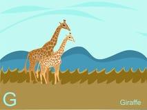 Grelle Karte des Tieralphabetes, G für Giraffe Stockfoto