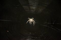 Grelle Lit-Spinne und Netz Stockbild