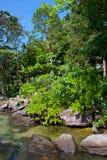 Gren roślinność przy czystym morzem w Kambodża Zdjęcia Stock