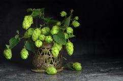 Gren verse hop Royalty-vrije Stock Foto
