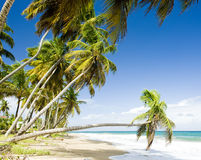 Grenada. Beach of Sauteurs Bay in Grenada Royalty Free Stock Photo