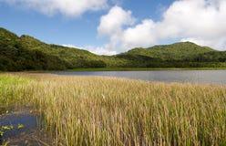 Grenada island - Grand Etang Lake. Grenada island - Grand Etang National Park - Grand Etang Lake royalty free stock photography